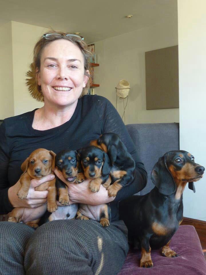 Cosima Her Babies Gustav S Dachshund World And Friends Baby