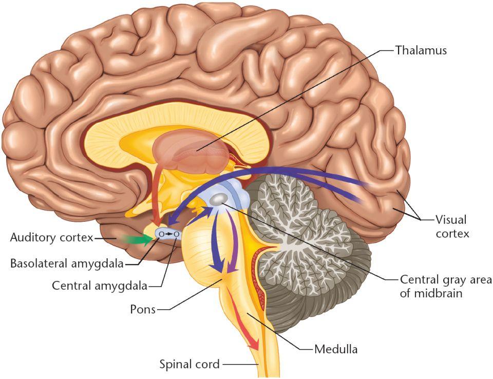 beware of amygdala hijacks!