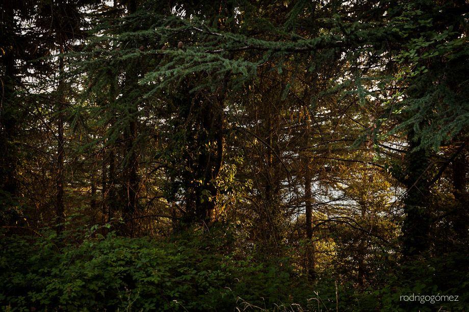 La 4 de la serie Lost in the Woods - Montseny