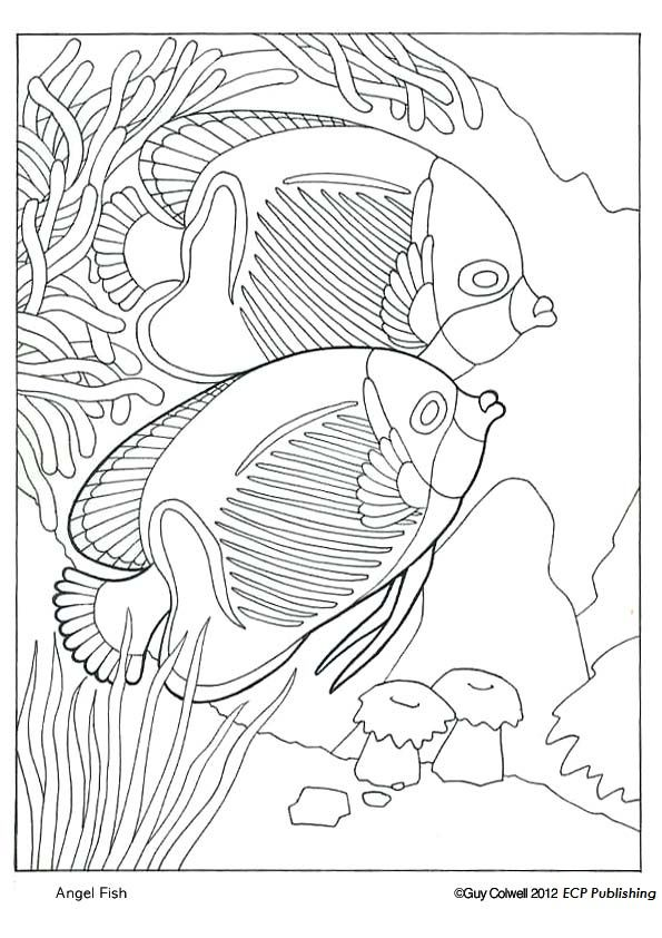 angel-fish coloring page | animales | Pinterest | Fondo marino ...