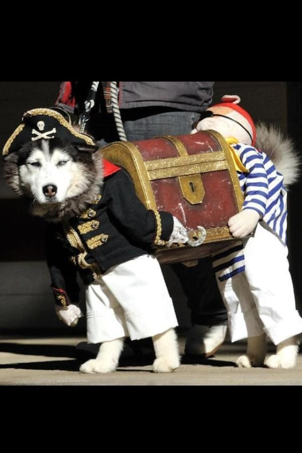 Ricky Gervais On Best Dog Costumes Dog Pirate Costume Dog