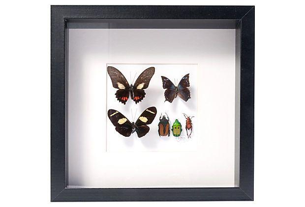 Framed Insects, III on OneKingsLane.com