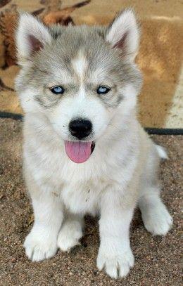 7 Dog Breeds That Won T Stink Up Your House Dog Breeds Female