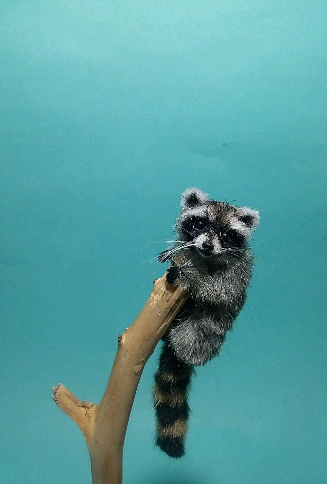Ooak Realistic Poseable Raccoon In 1 12th Scale Dollhouse Handmade By Ewelina In Dolls Bears Dolls Miniatures Hous With Images Miniature Animals Doll House Scale Art
