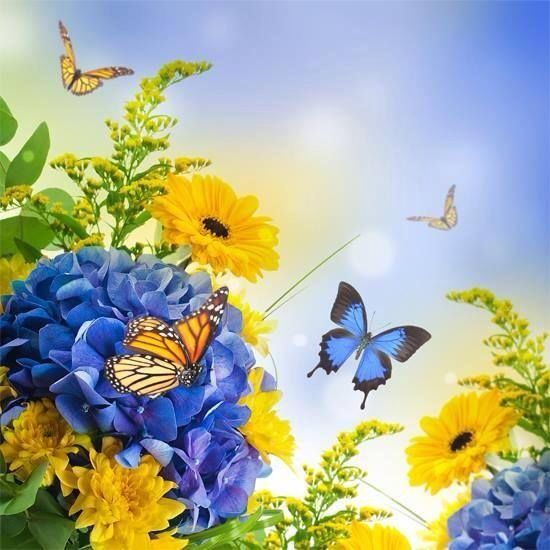 Blue And Yellow Flowers Erflies Pictures Photos Images For