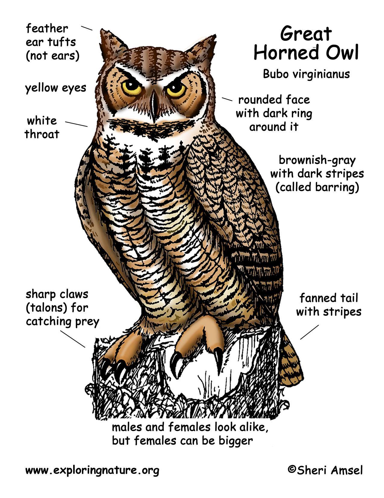 Fuelcelldiagramwikimediacommonsgif Images Frompo Wiring Data Owl Body Diagram Wire Schema U2022 Rh Wxapp Pw
