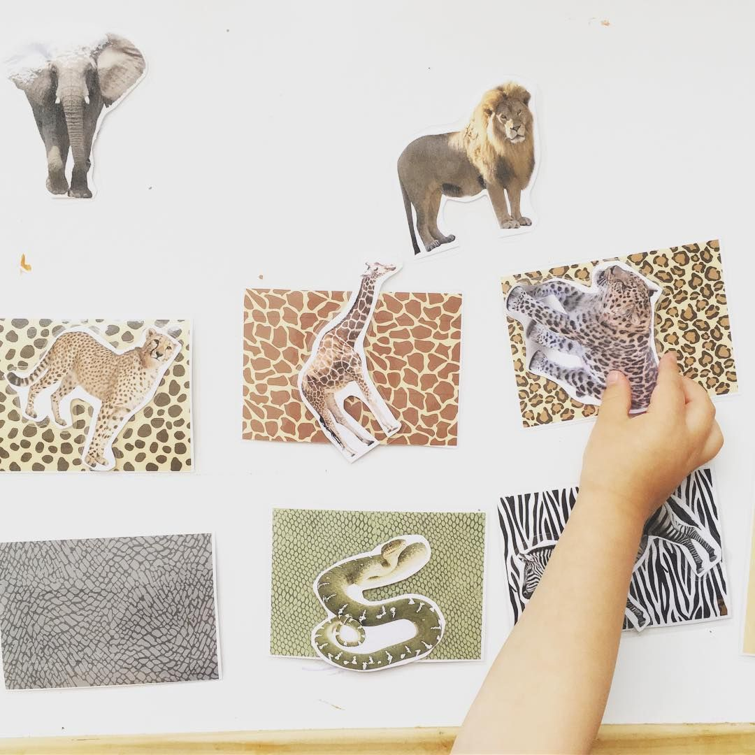 Matchy matchy animal print match. The animal print cards are from the fab…