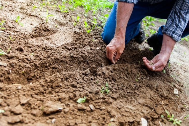 A man planting some seeds of grass on his prepared soil. Read more at: https://gardenambition.com/how-long-does-grass-seed-take-to-grow/