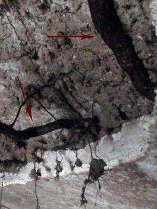 Stazione 2 – Ambiente 41 radici affioranti in un tratto murario verticale - Archivio SSBAR