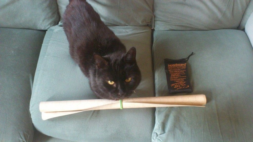 Cat plus gaming mat. Cute and geeky