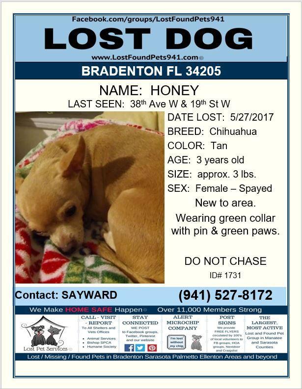 Have You Seen Honey Lostdog Chihuahua Lost Bradenton Fl 34205 Share Lostfoundpets941 Losing A Dog Losing A Pet Service Animal