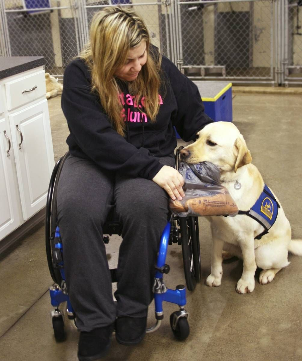 Service Dogs Help People In Wheelchairs Navigate Winter Service