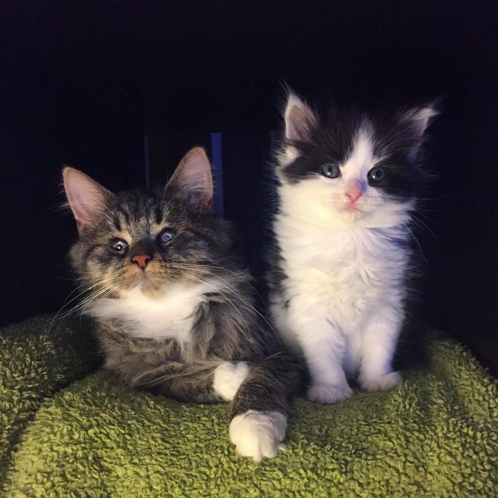 Kitten Becomes Seeing Eye Companion To Blind Cat Who Was Found On Streets Just Like Her Love Meow Cats Kitten Cat Meeting