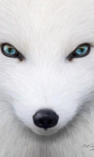 Arctic Fox Wallpapers And Backgrounds Application With Beautiful High Arctic Fox Albino Animals Animals Beautiful