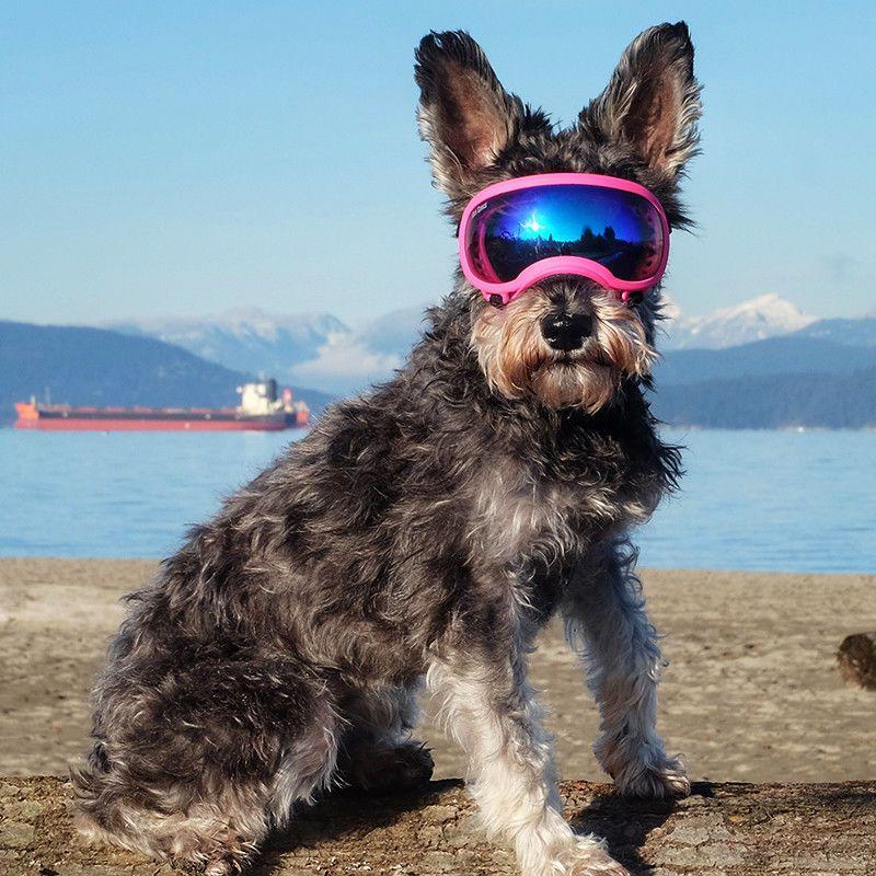 Hundebrille Hundesonnenbrille Schutzbrille Fur Hunde Grosse S