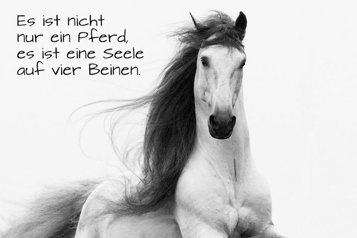Noch Eine Idee Zum Thema Pferdespruche Und Pferdebilder Hier Ist Ein Weisses Grosses Wildes Pferd Mit Schwarzen Aug Schone Pferde Pferdespruche Pferde Bilder