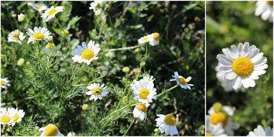 VI VIL HAVE GRØFTEKANTERNE TILBAGE - Wildflowers