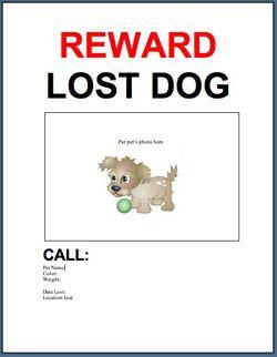 Charming Lost Dog Flyer @blog.adoptapet.com #LostDog #flyertemplate