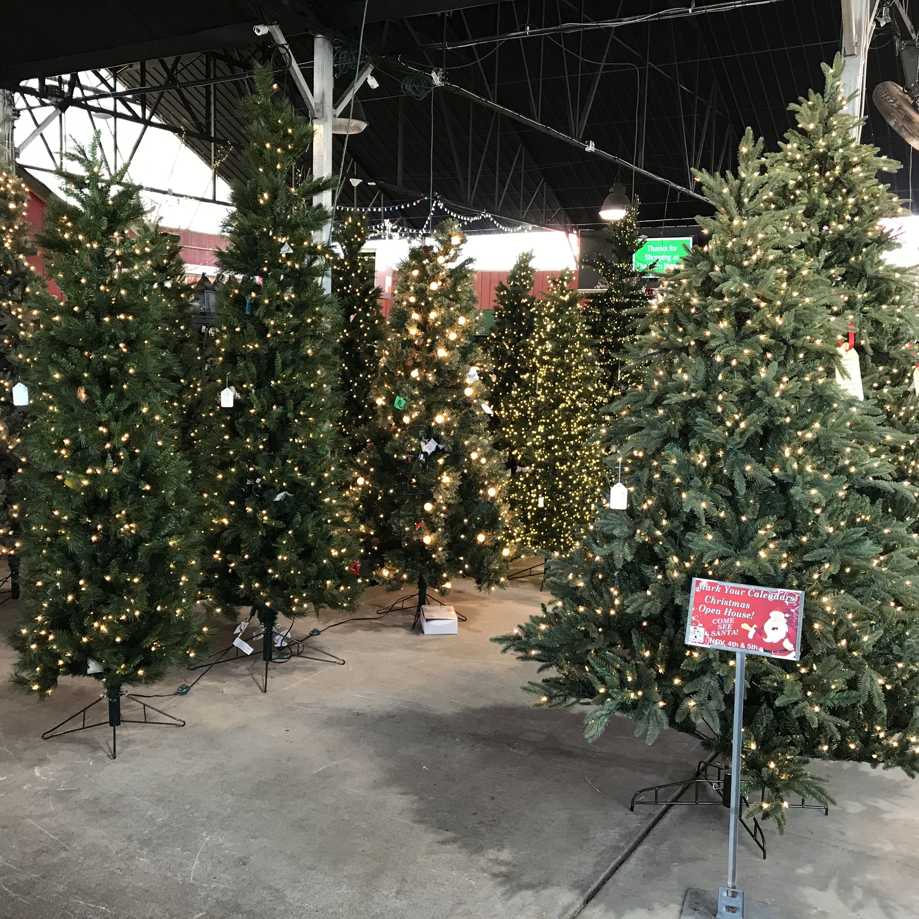 Christmas Tree Forest At The Barn Nursery, Chattanooga