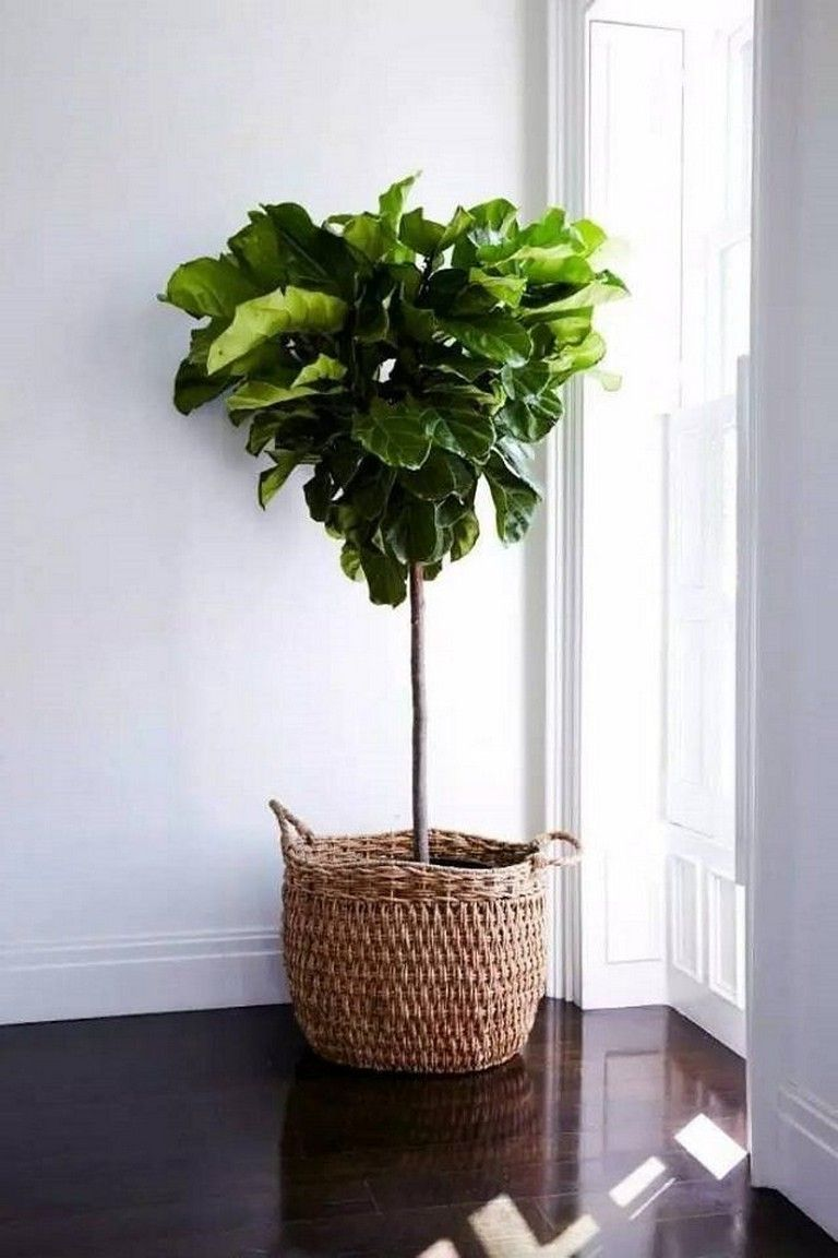 55+ Creative Houseplants For Indoor Plants Natural home