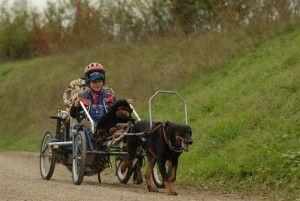 Sacco Dog Cart Dog Carts For Sale Dog Carting Equipment Dog