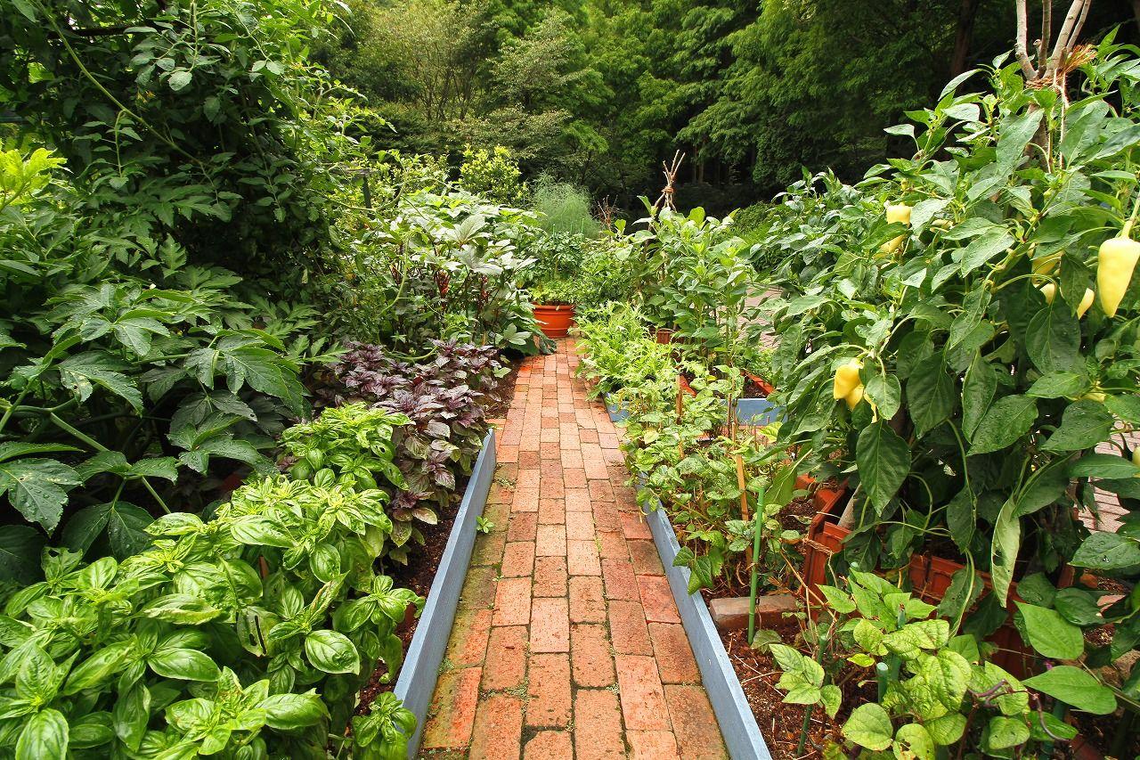 夏のガーデン キッズガーデン登場 家庭菜園 菜園デザイン ハーブ園