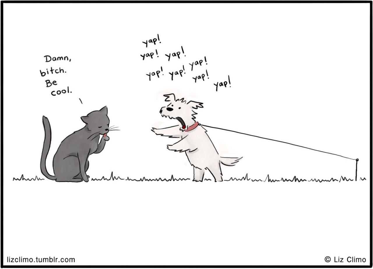 Cat Dog P