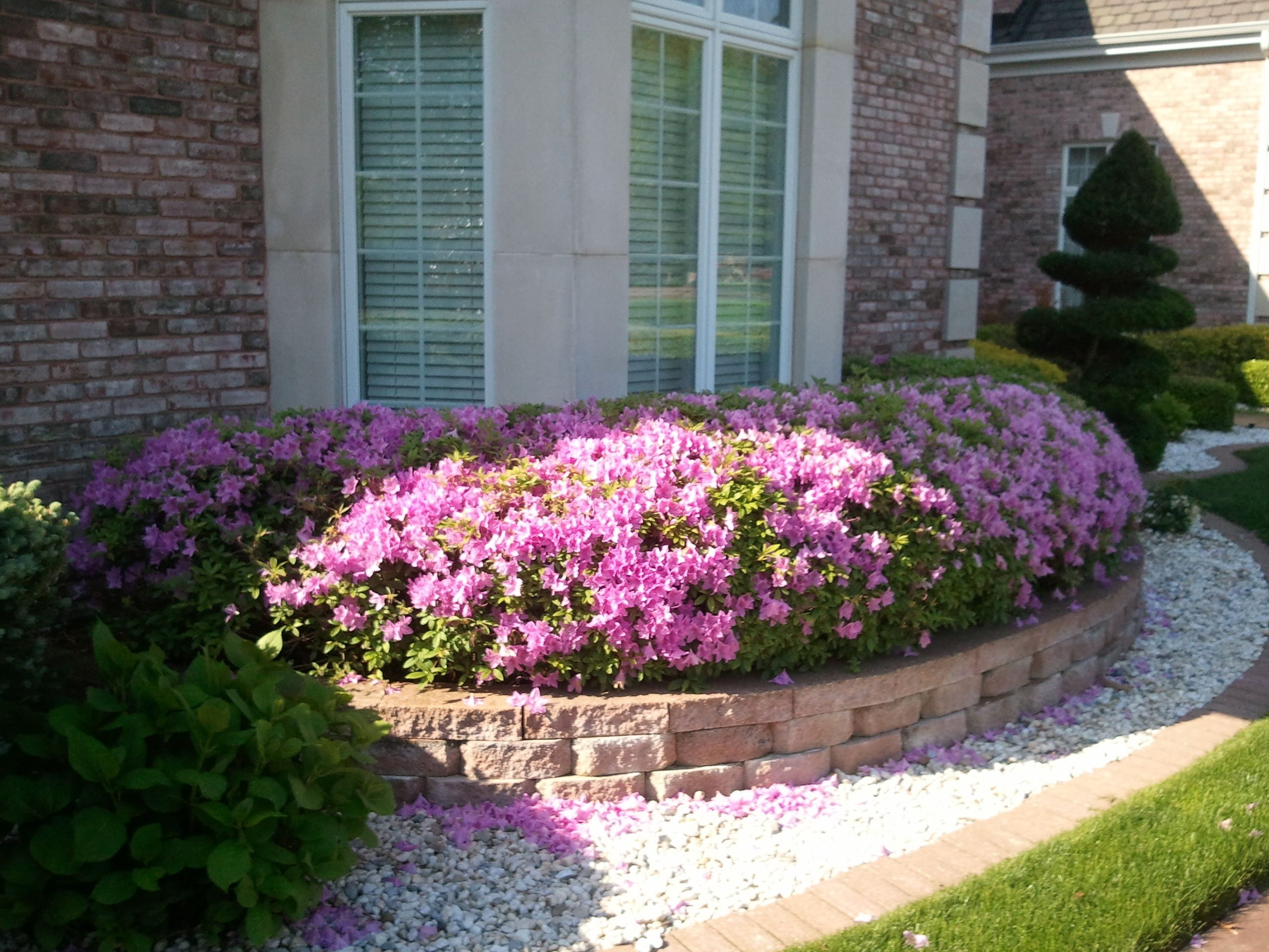 residential landscape design azalea hedge colorful