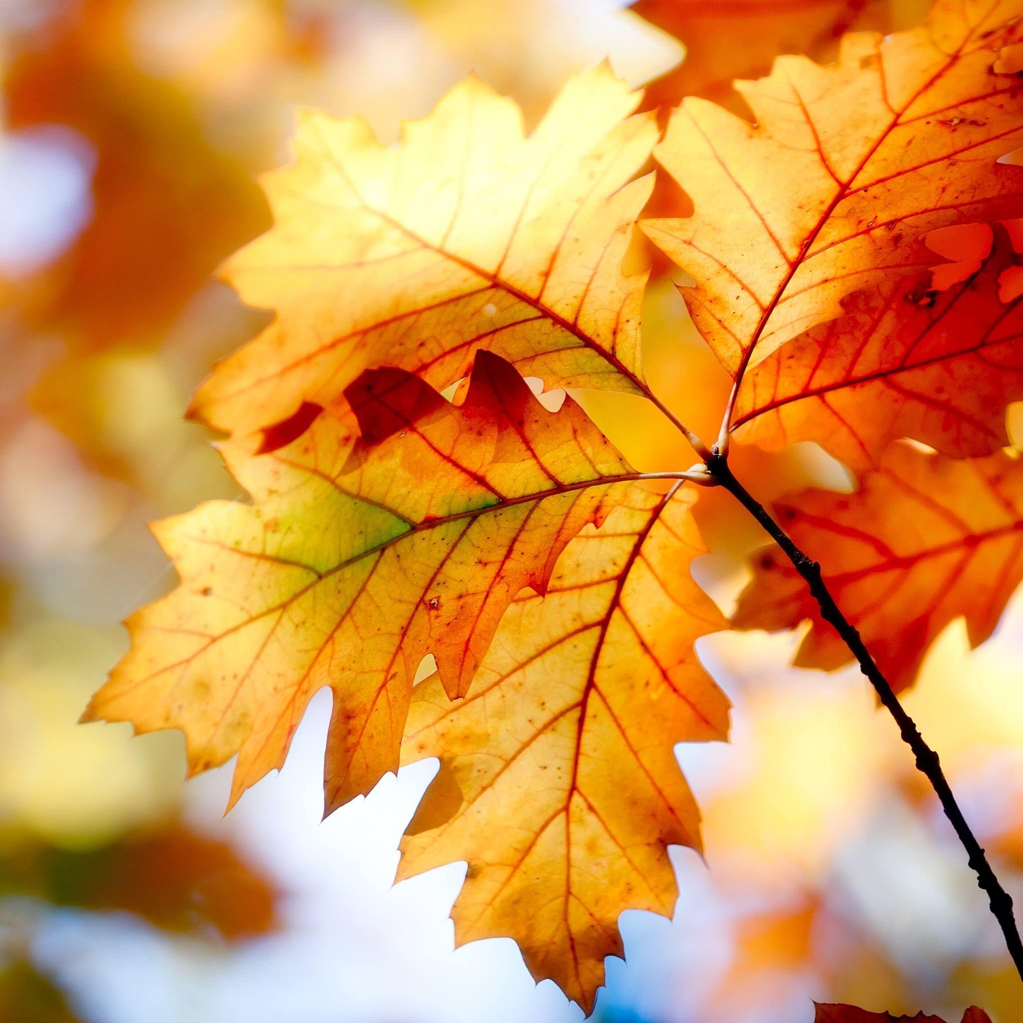 Autumn Leaf iPad Wallpaper HD Autumn leaves, Fall colors