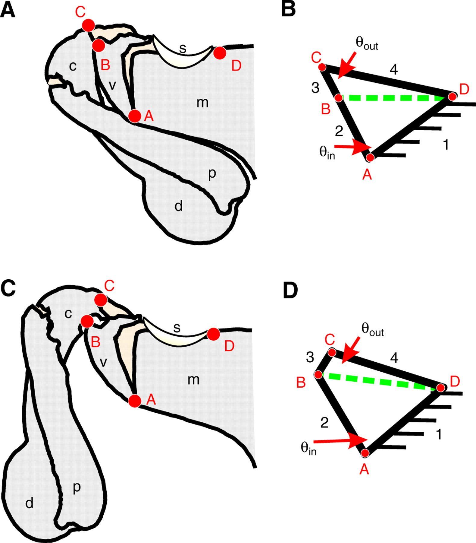 Pin By Mike Rotz On Mantis Shrimp Mantis Shrimp Systems Biology