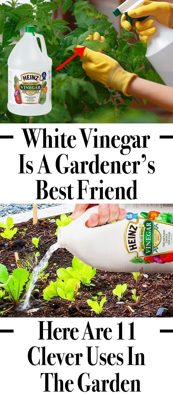 White Vinegar Is a Gardener's Best Friend. Here Are 11 Clever Uses in the Garden   #outdoorgardens
