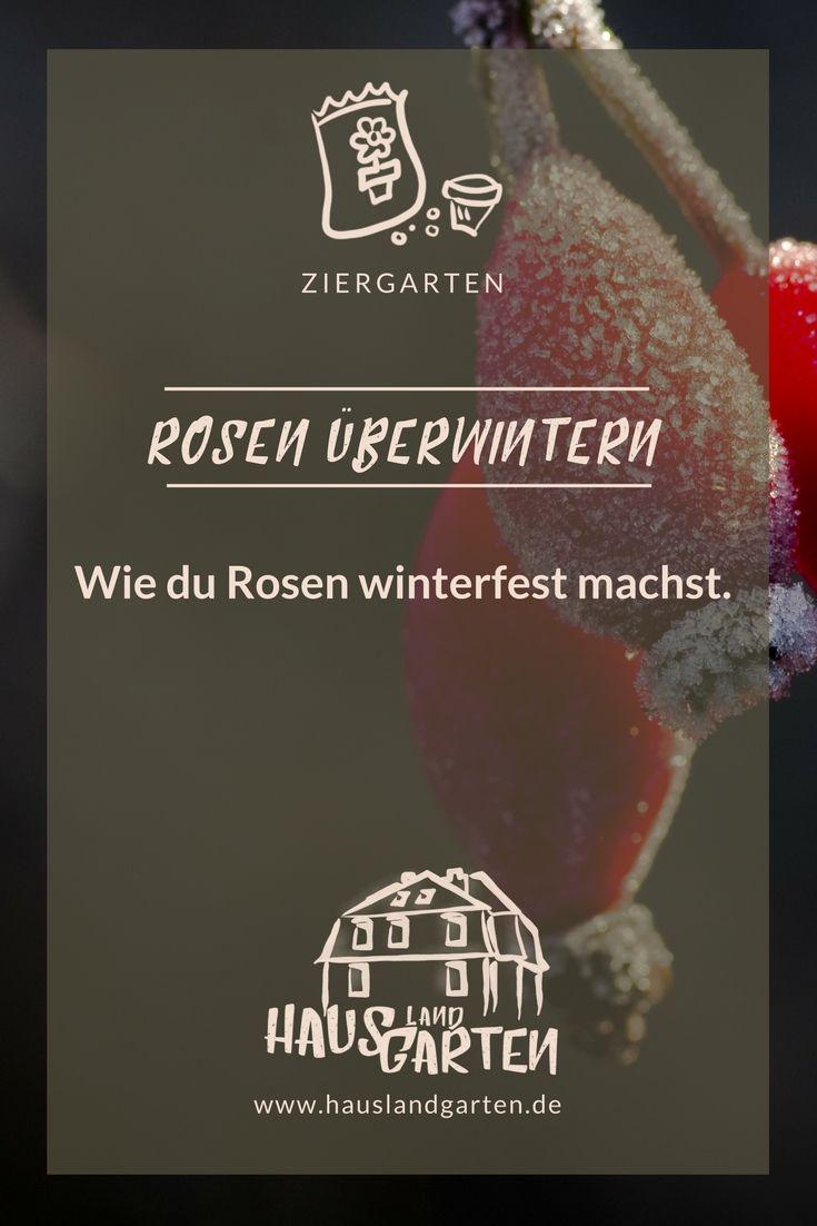 Rosen Winterfest Machen Rosen überwintern Winter Im Garten Garten - Fliesen winterfest