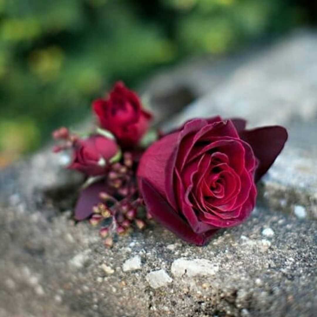 Get rose flowers images dps, beautiful whatsapp dp rose flowers rose images for whatsapp profile pic , rose dps and beautiful love rose. Pin on dps