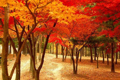 Autumn Forest, South Korea