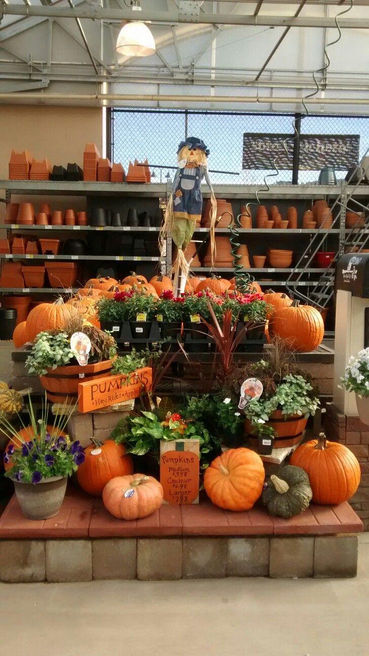 Pin By Kathy Collins On Garden Retail Displays Garden Center Displays Autumn Display Florist Window Display