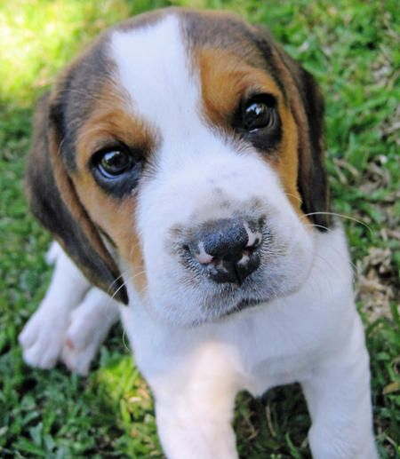 A Guide To Buy The Best Dry Dog Food Cute Dog Photos Pet Dogs