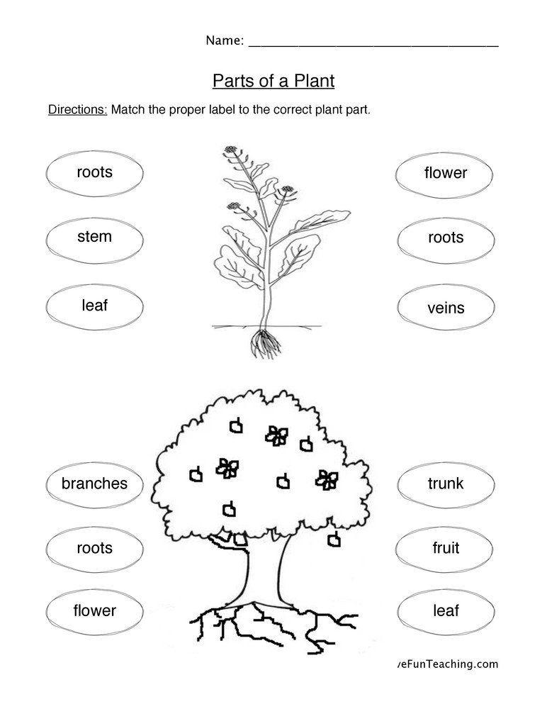Plant Worksheets for Kindergarten Plant Parts We Eat