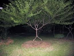 amazing trees - Google Search