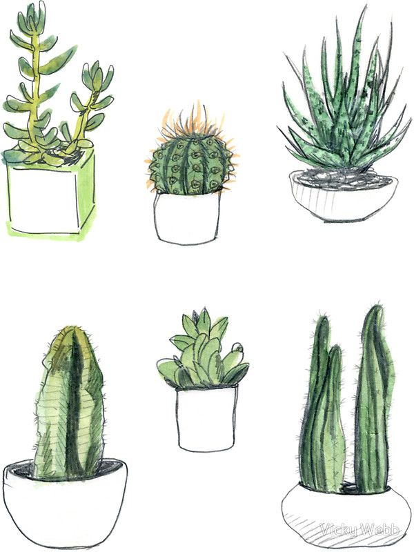 Watercolour Cacti Succulents Sticker By Vicky Webb Watercolor