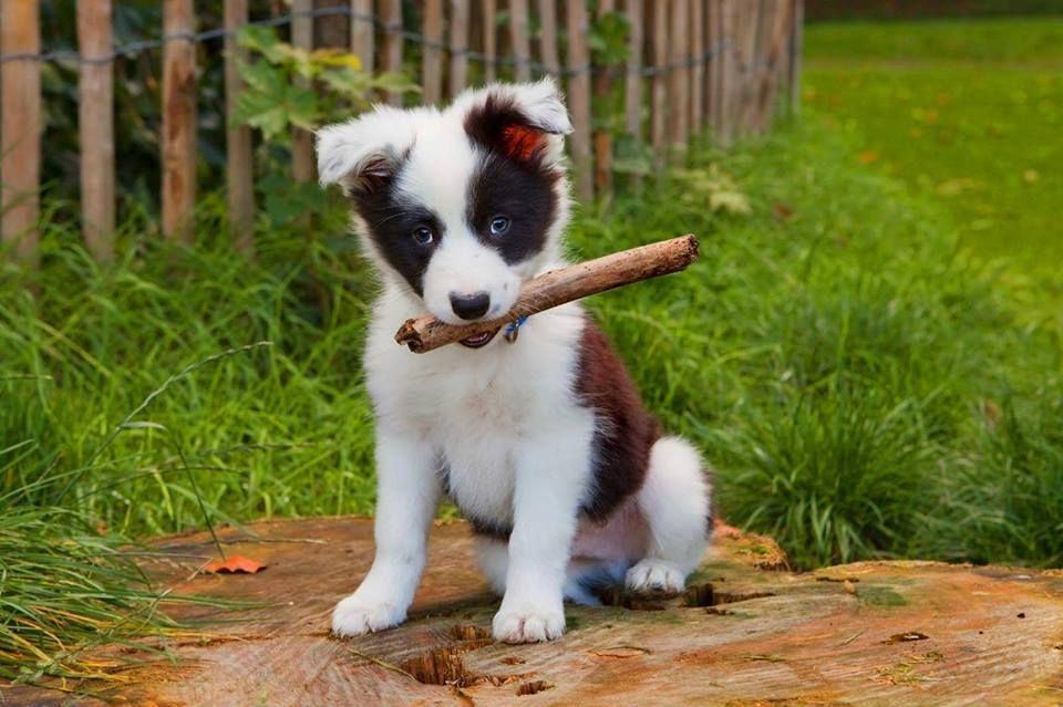 That Stick Probably Weighs As Much As This Adorable Little Puppy