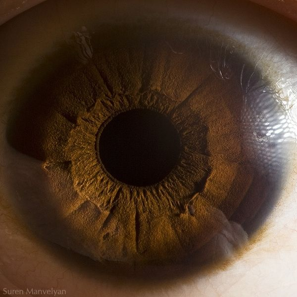 Close up iris by  Suren Manvelyan