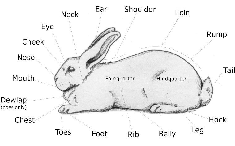 This website is really cool for the rabbit lovers, because they cave ...