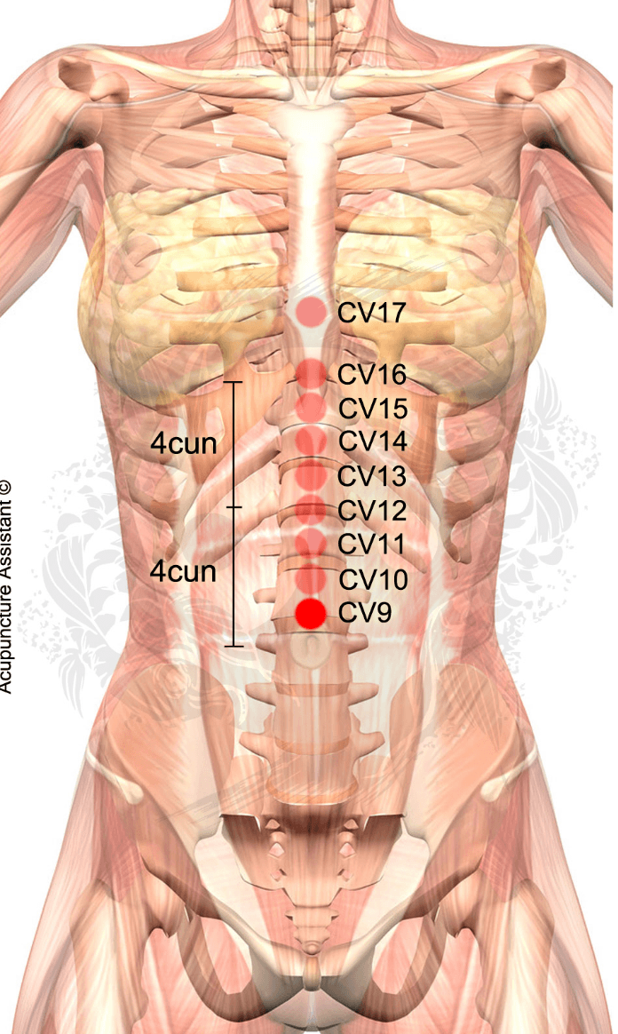 Point Localization: 1 cun above CV8 (belly button). TCM Actions ...