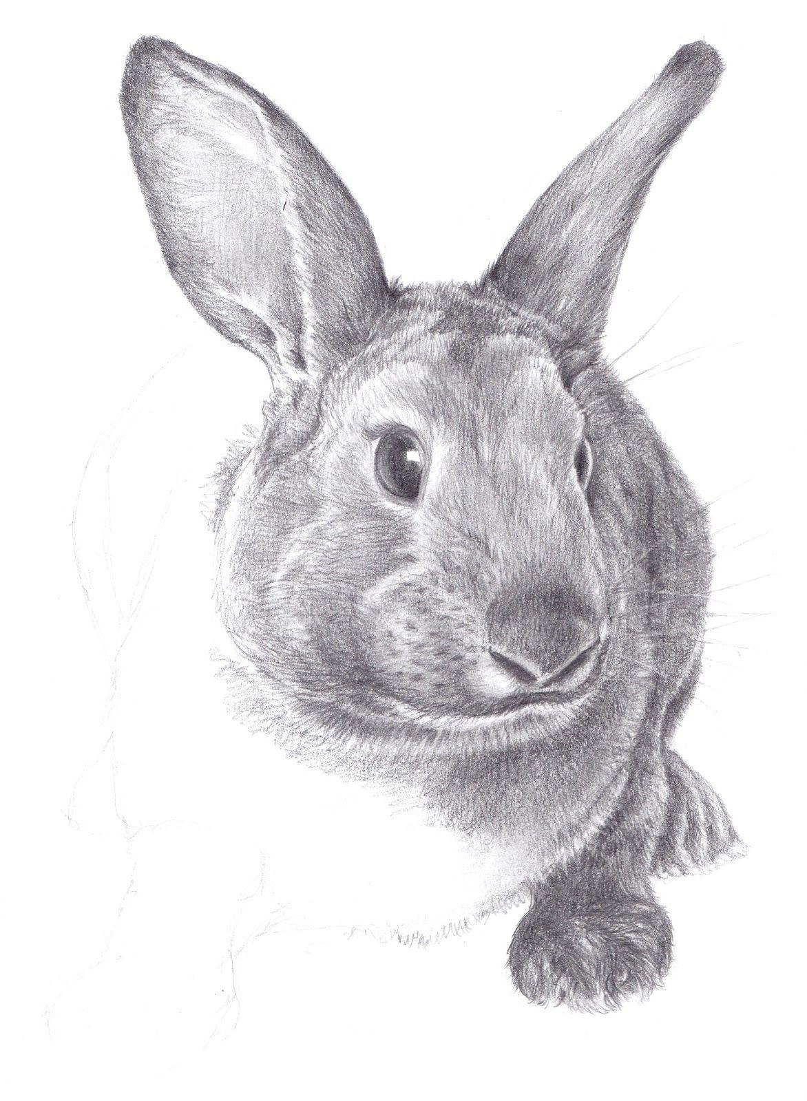 Drawings Drawings Sketch Painting Rabbit