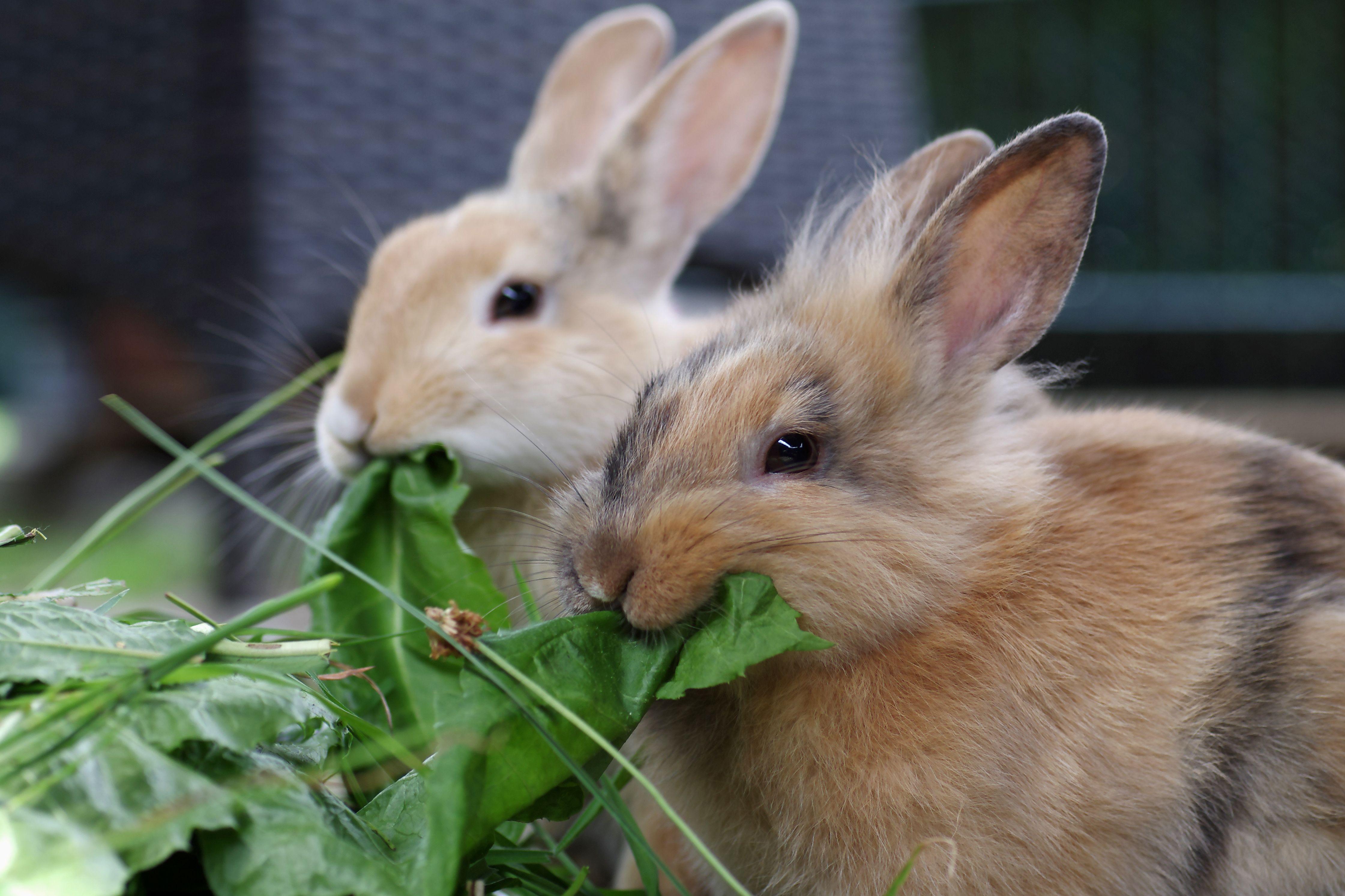 Vergesellschaftung von Kaninchen So finden die Kaninchen ...
