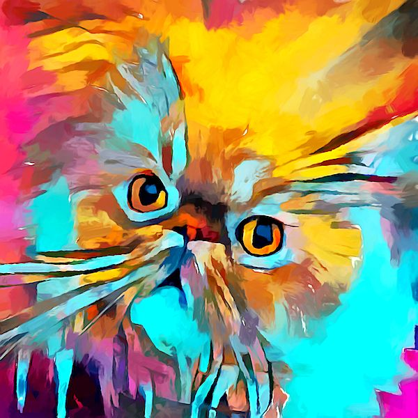 #persiancat #persian #persiankitten #persiancatsofinstagram #naice #chinchillacat #persian_feature #جیگر #persiangirl #هنری #داف #usagirl #persiancats #نقاشی #عکاسی #u #persiancorner #kucing #beutiful #flatface #دختر #هنر #catsofinsta #catvideo #arabic #bestmeow #catloversclub #catoftheday #catofinstagram #whitecat