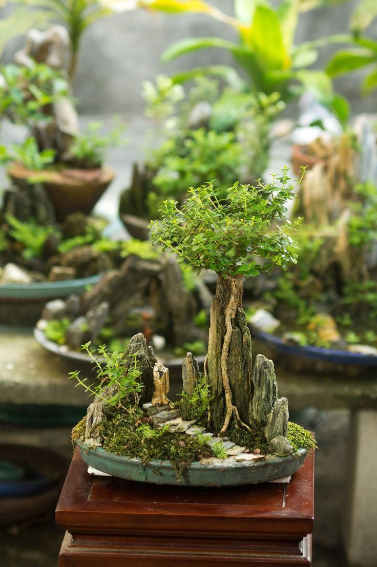 Photo of How-To-Start-A-Bonsai-Tree – The DIY Blog