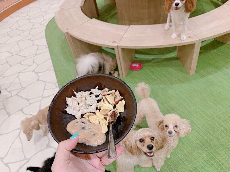 下北沢 話題の子犬カフェrio リオ に潜入 可愛すぎるわんこたちに癒されよう カフェ 子犬 居心地の良いカフェ