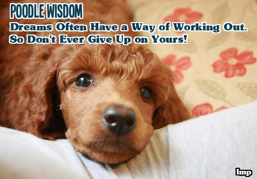 Pin On Poodle Wisdom