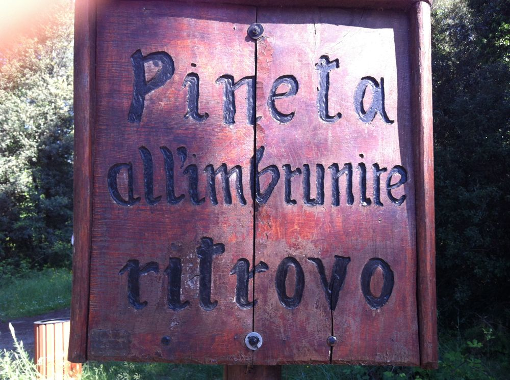 Pineta di Milano Marittima all'imbrunire ritrovo... -   Pine forest in Milano Marittima gathering dusk ... http://www.mimaclubhotel.it/it/